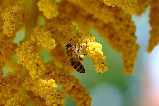 Palm Flowers, Bee, Pollinate, Pollination