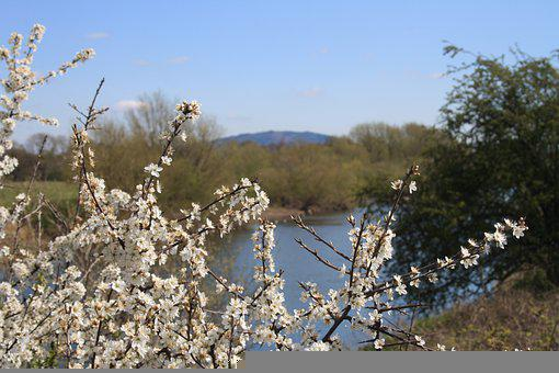 Flowers, River, Hill, Blossom, Bloom, Spring, Nature