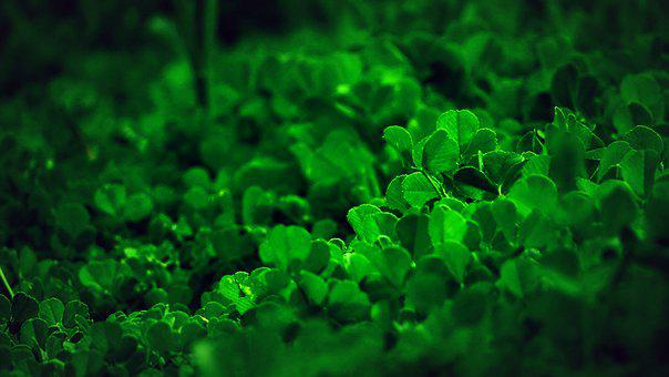 Clover, Leaves, Green, Nature, Plants