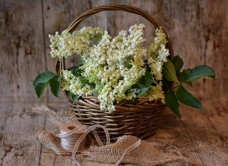 Elderflowers, Basket, Flower Basket, Flowers