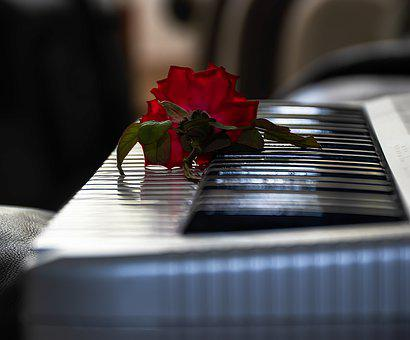 Red Rose, Flower, Piano, Keys, Keyboard, Romantic