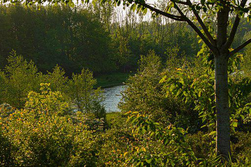 Silent Core, Forest, Trees, River, More, Forests