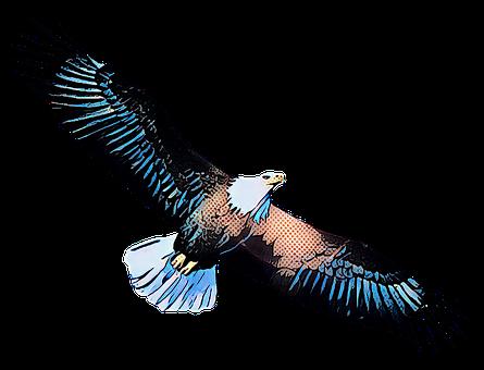 Eagle, Bird, Fly, Soar, Flying, Freedom, Animal