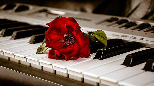 Rose, Flower, Piano, Keys, Keyboard, Romantic