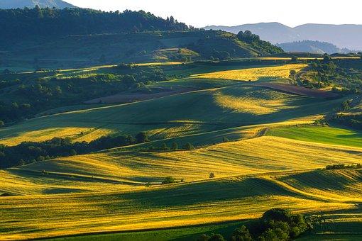 Fields, Hills, Wheat Fields, Agriculture, Farmlands