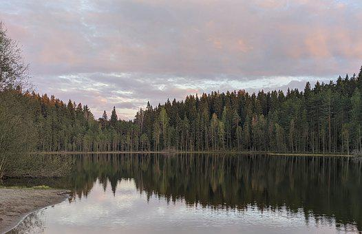 Lake, Forest, Trees, Woods, Woodlands, Conifers