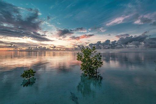 Sea, Mangrove, Dawn, Twilight, Sunrise, Reflection