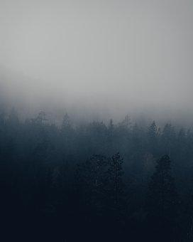 Forest, Fog, Evening, Trees, Woods
