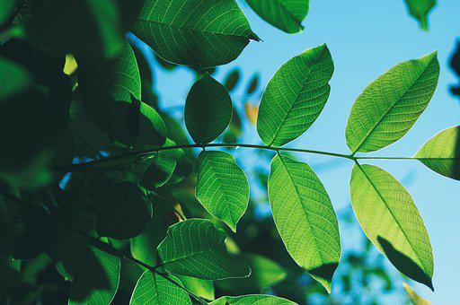 Green, Leaves, Tree, Branches, Backlighting, Foliage