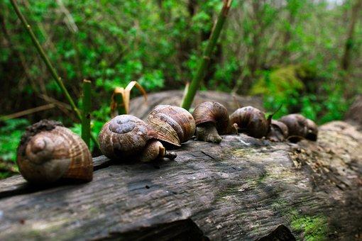 Snails, Tree, Trunk, Forest, Shells, Mollusks