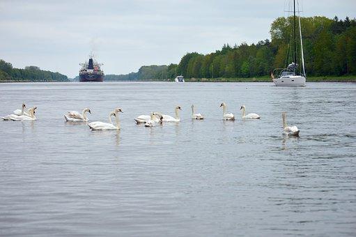 Swans, Ships, Sailing Boats, Animals, Nature, Waterway