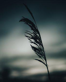 Evening, Grass, Plant, Silhouette