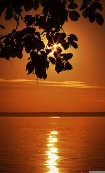 Sunset, Leaves, Lake, Branch, Tree, Silhouette