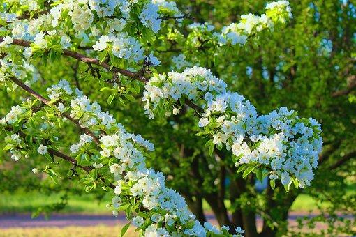 Flowers, Petals, Spring, Tree, Blue Petals, Nature