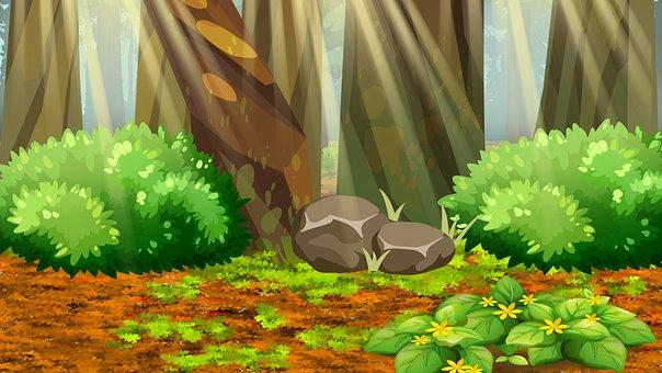 Forest, Bushes, Rocks, Trees, Tree Trunks, Sunlight