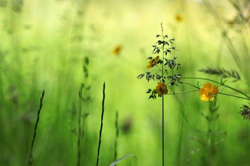 Flower, Yellow Flower, Little Flower, Small Flower
