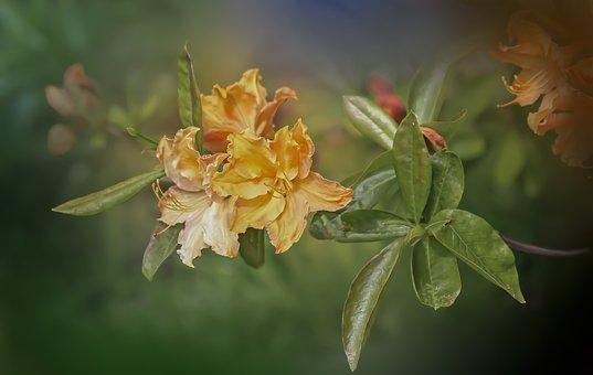 Flower, Azalea, Yellow Flower, Plant, Nature, Petals