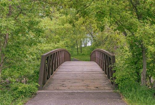 Bridge, Forest, Park, Path, Trail, Walkway, Trees