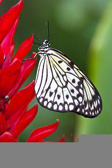 Butterfly, Flower, Wings, Pollinate, Pollination, Macro