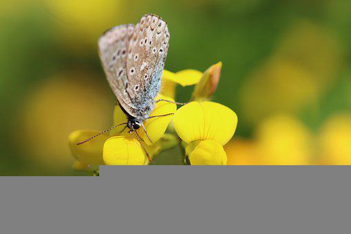 Butterfly, Yellow Flowers, Pollinate, Pollination
