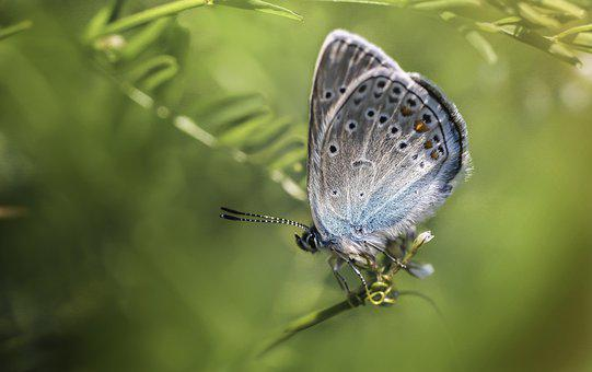 Butterfly, Wings, Insect, Butterfly Wings