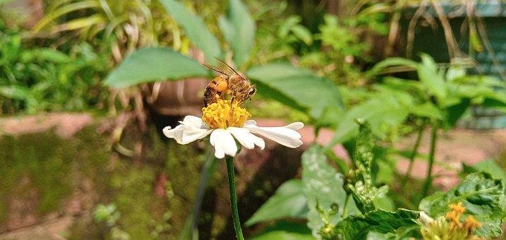 Bee, Flower, Pollen, Pollinate