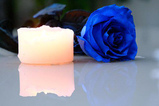 Rose, Flower, Candle, Blue Rose, Reflection, Petals