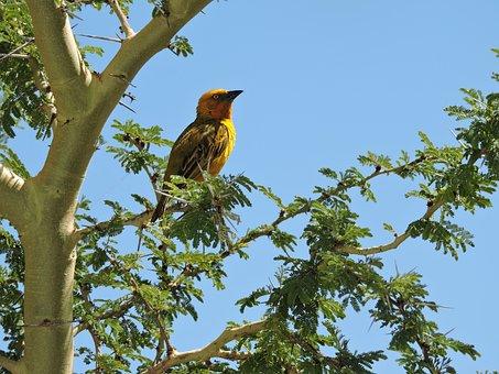 Sparrow, Bird, Tree, Thorns, Leaves, Nature, Animal