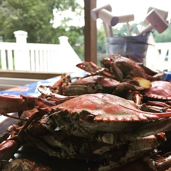 Crab, Blue Crab, Seafood, Food, Marine, Nature, Sea