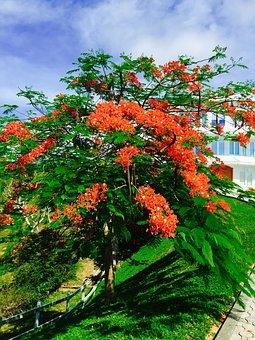 Roatan, Bay Islands, Palmetto Coasts, Bush, Red Blossom
