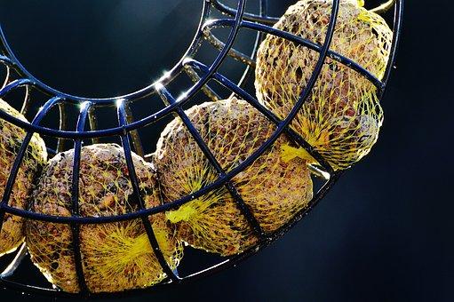 Fat Balls, Food, Bird Seed, Feed, Eat, Web, Hang
