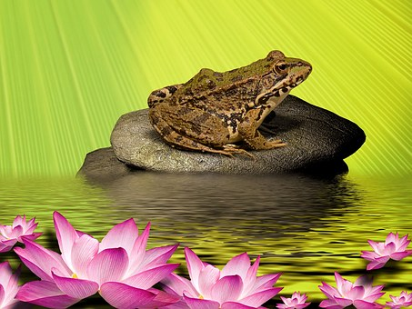 Frog, Water Lily, Stone, Water, Water Frog, Garden Pond