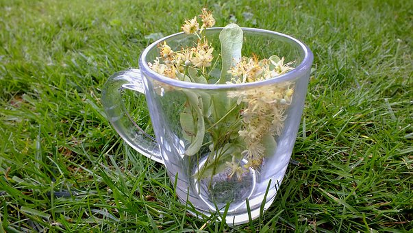 Herbs, Herbal Tea, Linden Flowers, Plants, Tea, Medical