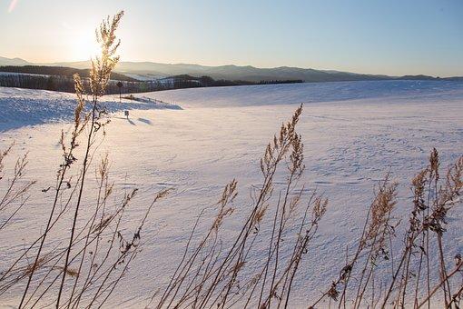 Hokaido, Snow, Blue Sky, Japan, Landscape, Nature