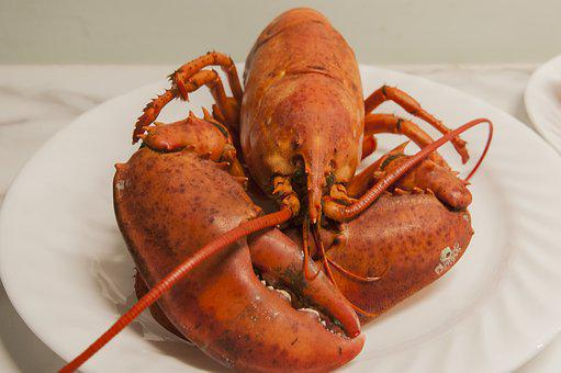 Lobster, Seafood, Shellfish, Claw, Cooked