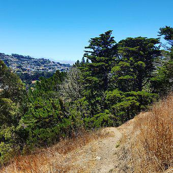 John Mc Laren, Park, San Francisco, Trees, Tree, Nature