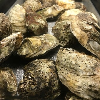 Oysters, Fresh, Seafood, Food, Shellfish, Raw, Sea