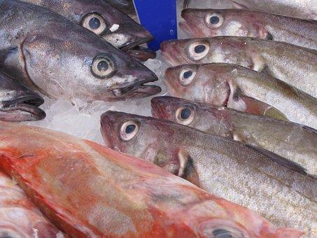 Fish, Herring, Smoked, Animal, Fresh, Food, Seafood