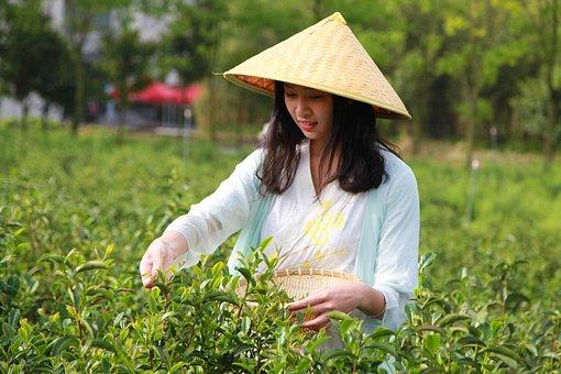 Woman, Hat, Field, Tea, University Student, Culture