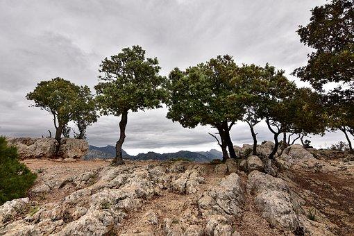 Mallorca, Alarao, Summit, Trees, W, Forest, Mountains