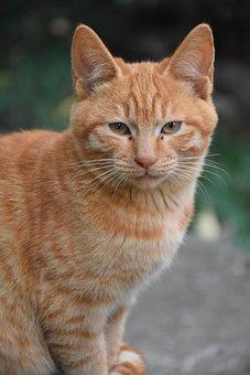 Cat, Peta, Animal, Feline, Cat Face, Cat Ears, Mammal