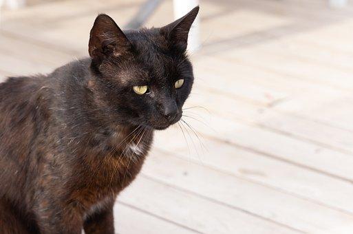 Cat, Pet, Animal, Black Cat, Domestic Cat, Feline