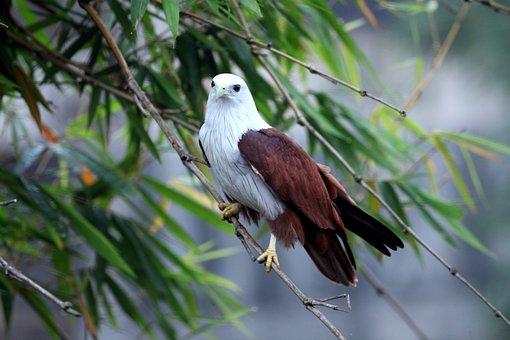 Eagle, Bird, Branch, Perched, Animal, Bird Of Prey