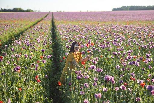 Poppy, Field, Tourist, Woman, Pose, Flowers, Plants