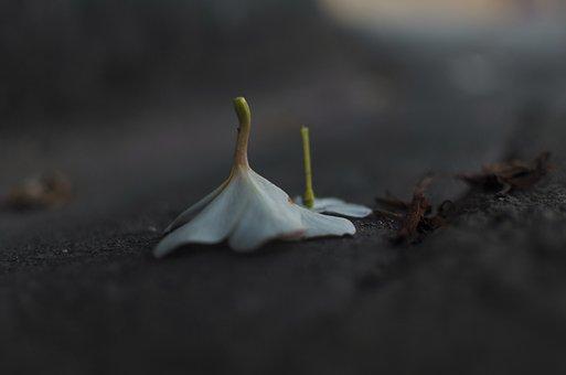 Plumeria, Flower, Pavement, Frangipani, White Flower