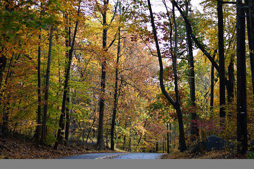 Road, Forest, Trees, Foliage, Leaves, Curve, Pavement