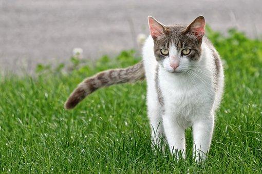 Cat, Pet, Feline, Animal, Kitty, Fur, Mammal, Grass