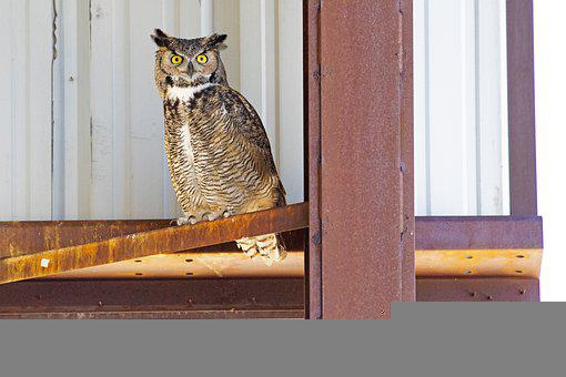 Great Horned Owl, Owl, Bird, Perched, Metal, Animal