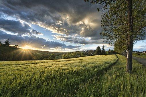 Sunset, Meadow, Grass, Sunlight, Cereals, Field