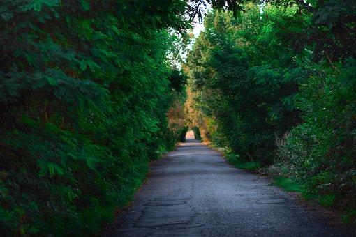 Road, Forest, Trees, Pavement, Asphalt, Path, Woods